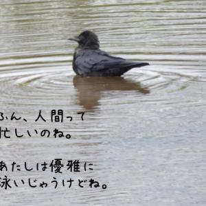 引っ越し騒動記☆