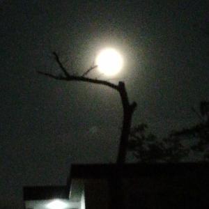 <今夜は満月>