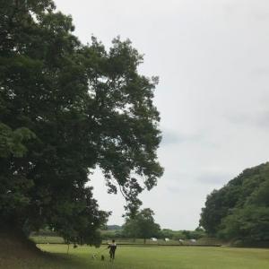 新しい公園を発見