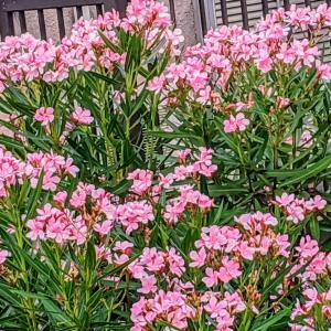 きれいな花には…