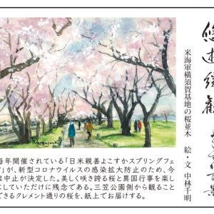米海軍横須賀基地の桜並木