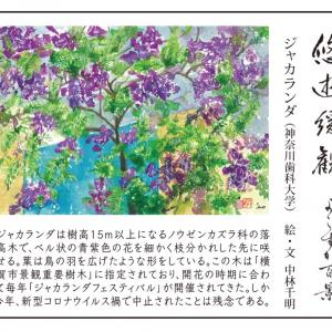 ジャカランダ(神奈川歯科大)