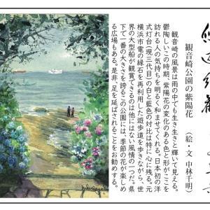 観音崎の紫陽花