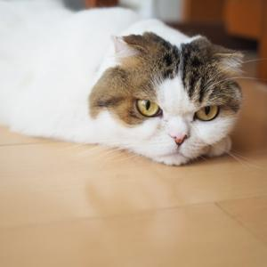 食物アレルギー猫のごはん~animonda INTEGRA PROTECT~