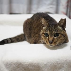 【猫の慢性気管支炎】新たな病気が見つかりました