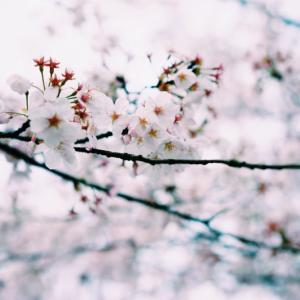 自分のエネルギーが、 春の生命エネルギーより弱い場合