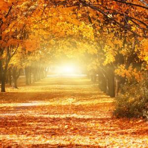強運の波に乗れる道、運命の人に出逢える道、使命を生きる道