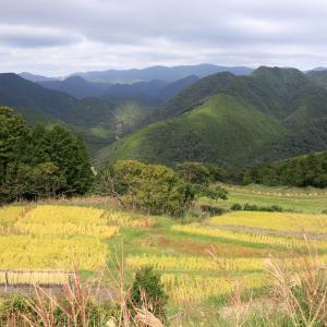 熊野古道中辺路 霧の郷 高原散策 (出会った植物たち )