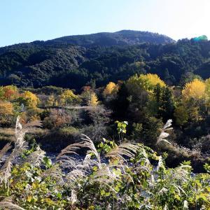 熊野古道中辺路  ( 近露王子、継桜王子、滝尻王子 ) の紅葉