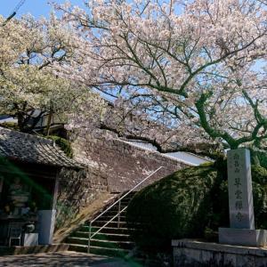 草堂寺の桜は満開