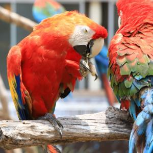アドベンチャーワールドのふれあい広場・ファミリー広場で暮らす動物たち
