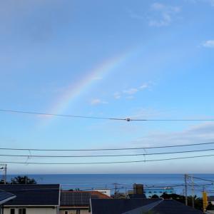 朝虹と京都大学白浜水族館前の 「 はまゆう 」