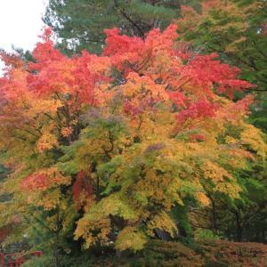 見事な紅葉の高野山