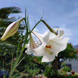 我が家の庭で咲く花
