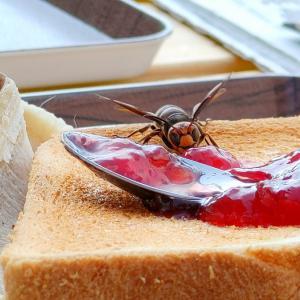 スズメバチが パンに塗ろうとしたイチゴジャムを横取りした