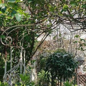 溢れる新緑の庭