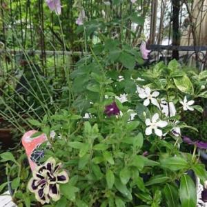寂しい庭の花