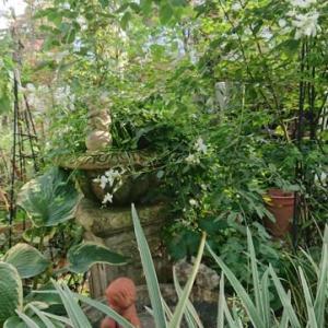 庭とリビング