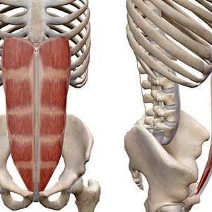 あなたは間違っていませんか?リバースクランチは骨盤を動かすことが胆です。