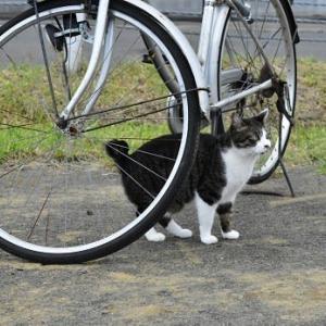 自転車警備 2020