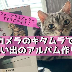 【カメラのキタムラ】フォトプラスブックを試してみた【思い出のアルバム】