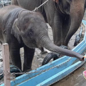 【GOTOで行こう】雨でも楽しかった市原ぞうの国♪大きな象さんに触ったりおやつあげ放題!
