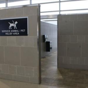 空港に犬が闊歩する風景。反日のメッカだったデトロイトの現在。