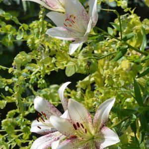 6月21日花の庭より