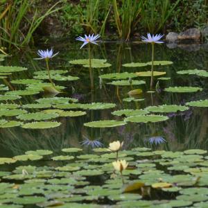 9月13日の花の美術館水の庭より
