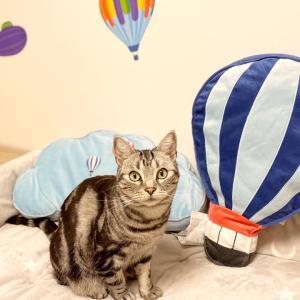【アムのお部屋】気球たち