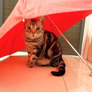 折り畳み傘の季節なのに