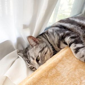 枕が必須なオトコ