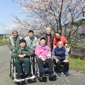 桜満開!花見に出かけました!のぎく荘デイサービス・すみれの会(介護予防・日常生活支援総合事業)