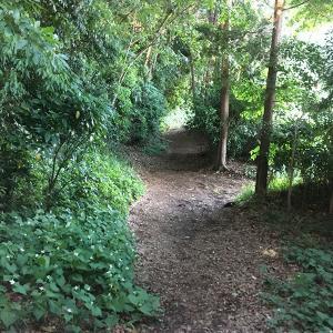 緑の散歩道と材木屋さんに行った話
