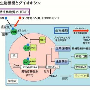 ダイオキシンと腸内細菌を繋ぐ化学物質センサー