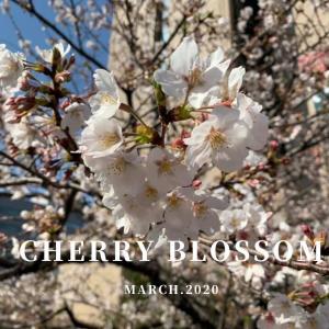 2020年の桜。桜を眺めて癒やしを感じる今年の春【日常】
