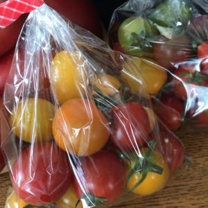 矛盾がはびこる世界と、トマトの美味しさに驚いた週末。