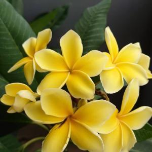 ハワイが恋しい