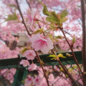 春にぴったり!赤とピンクのオルゴナイトおすすめします