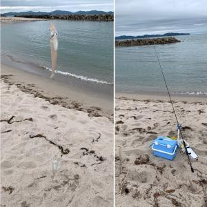 今年の釣り