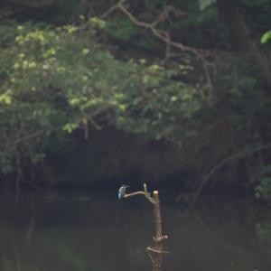 8月5日 成鳥が遊んでくれました。