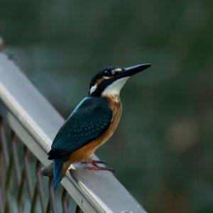 鳥撮りは日の出前に出勤