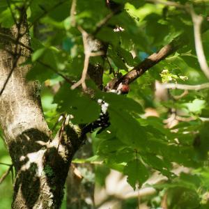 8月29日 鳥を探しに南へプチ遠征