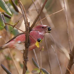 11月24日 南の峠で赤い鳥