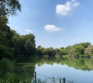 蚊に襲われた石神井公園
