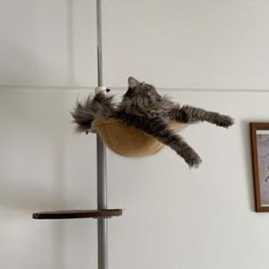 ガメラ猫、台風19号の進路を心配する?