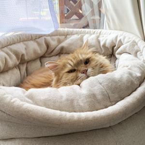 うみちゃん、猫ベッドが気に入りました