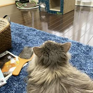 猫も観るよ。ワイルドライフ。