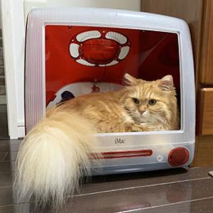 iMac 猫ハウスで寛ぎますか?