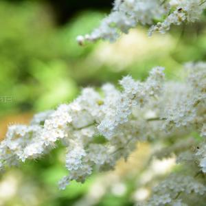 近所の花たち
